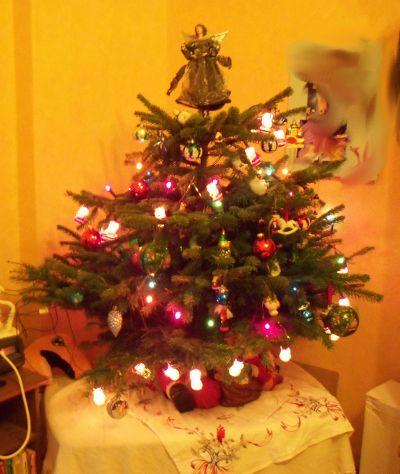 Mein Weihnachtsbaum 2010
