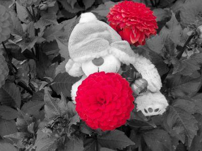 Teddy Bär im Blumen-Busch
