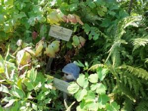 Herr Bär im Hexengarten