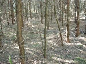 Waldbesuch