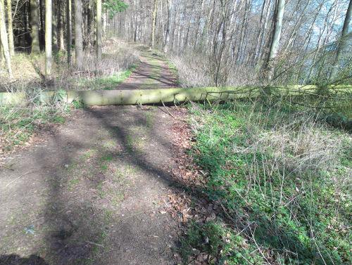 Baumstamm auf dem Weg
