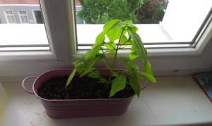 Auf dem Bild ist eine Pflanze zu sehen