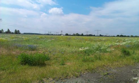 Kräuterwiese