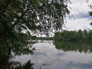 Bäume, Wolken und ein Gewässer
