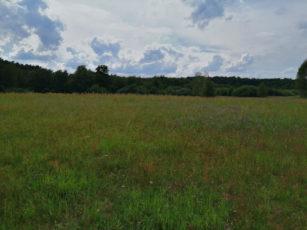 Wildwiese bei Erkner umgeben von Wald
