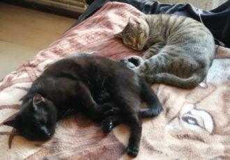 Zwei schlafende Katzen auf der Couch